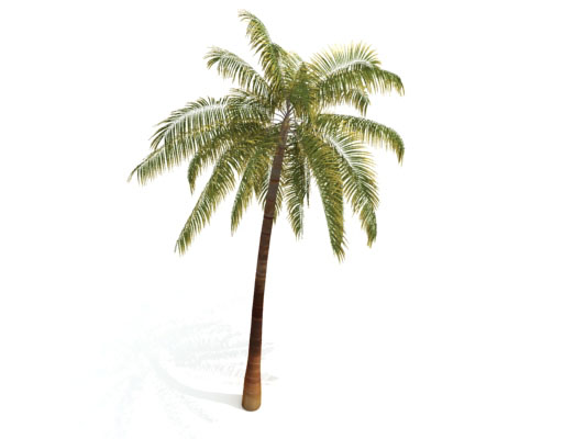 Description: C:\Users\Jared\Desktop\3d_palm_tree01.jpg